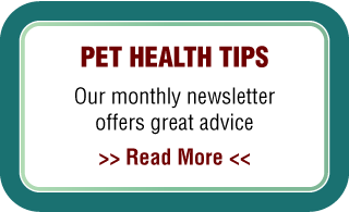 Pet Health Tips